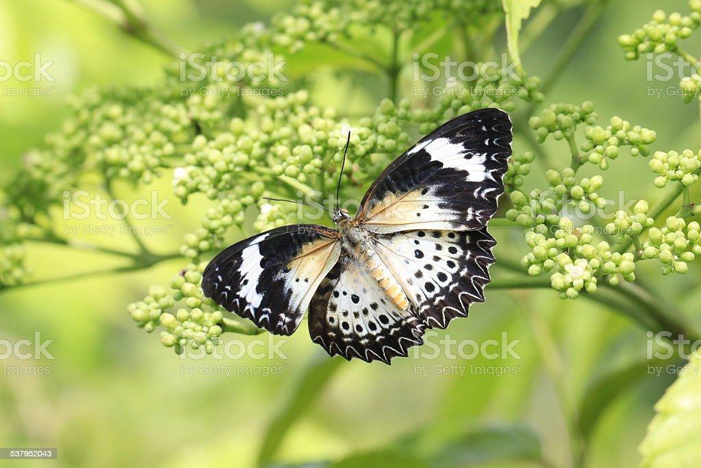 Papillons sur fleurs vert photo libre de droits