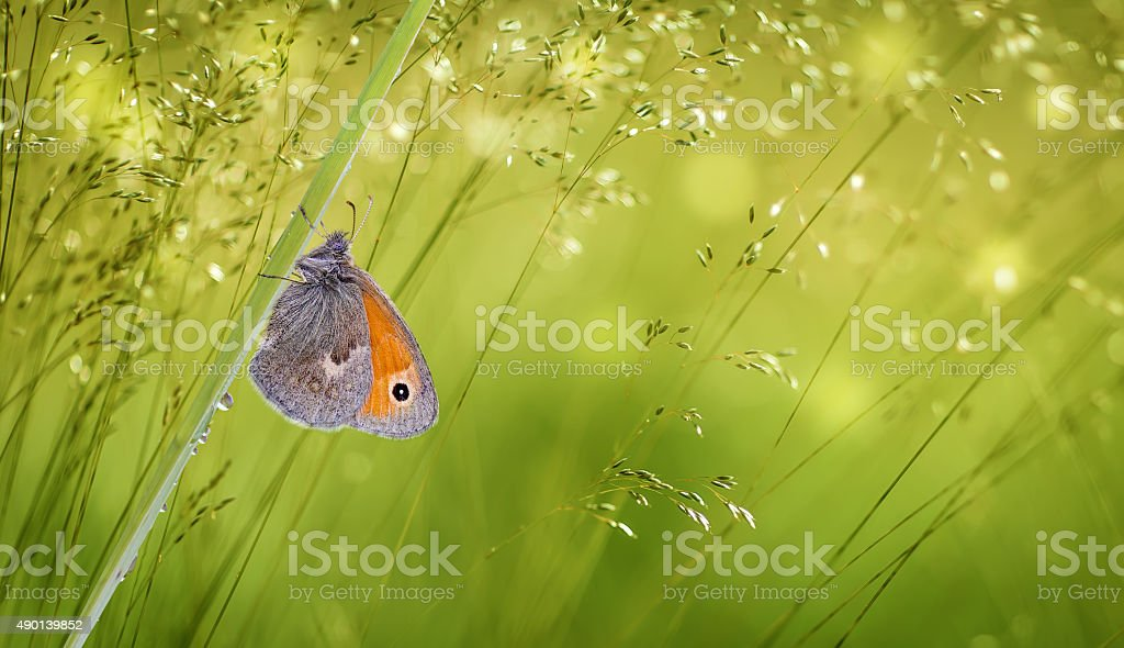 Butterfly on green grass panoramic view stock photo