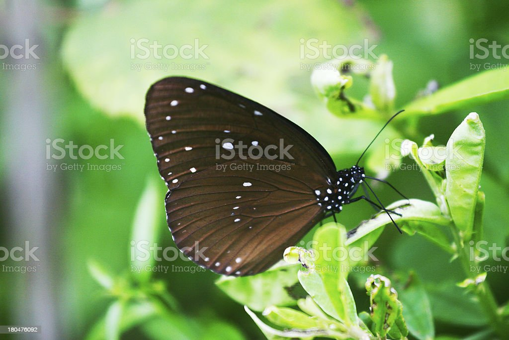 Butterfly on green leaves royalty-free stock photo