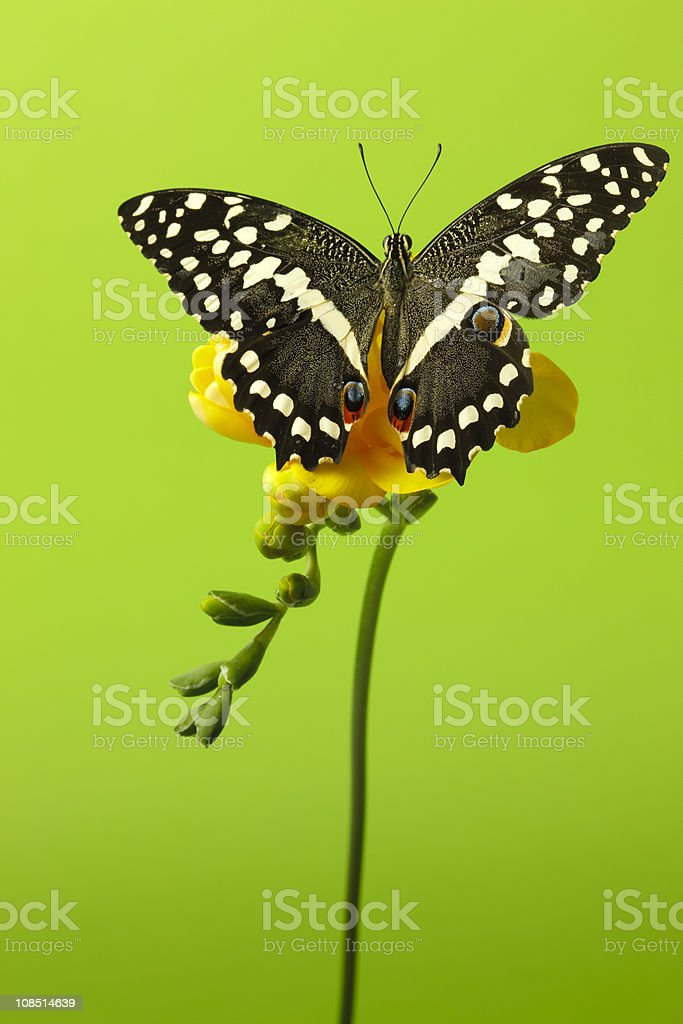Butterfly on green stock photo