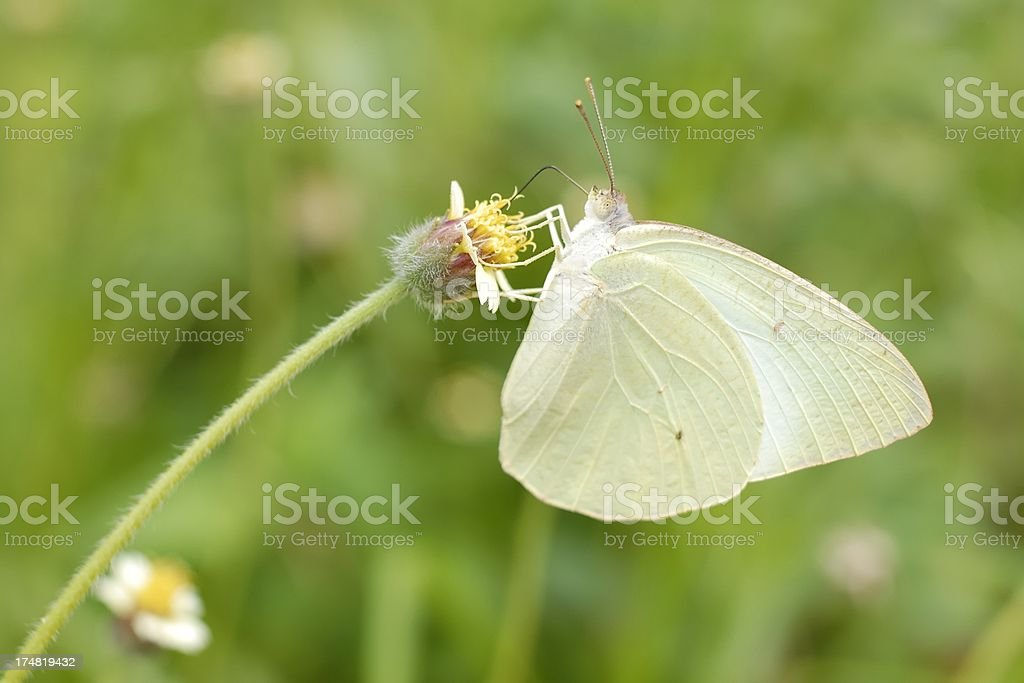Butterfly on green royalty-free stock photo