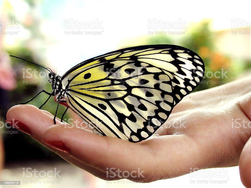 Butterfly on hand royalty-free stock photo
