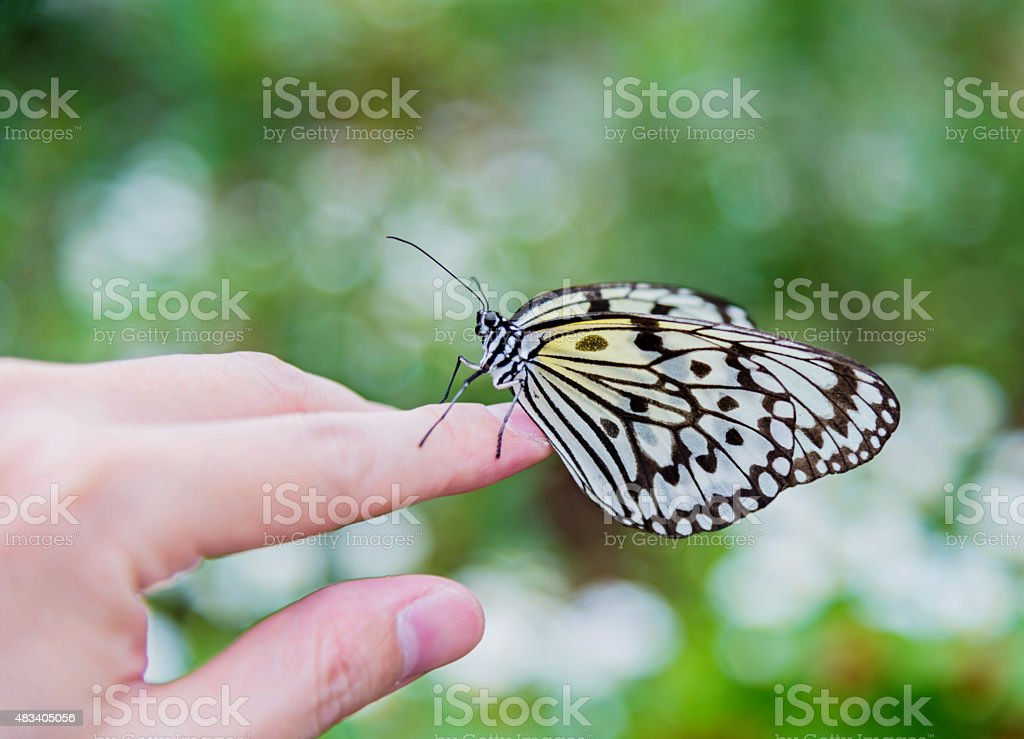 Butterfly on hand stock photo