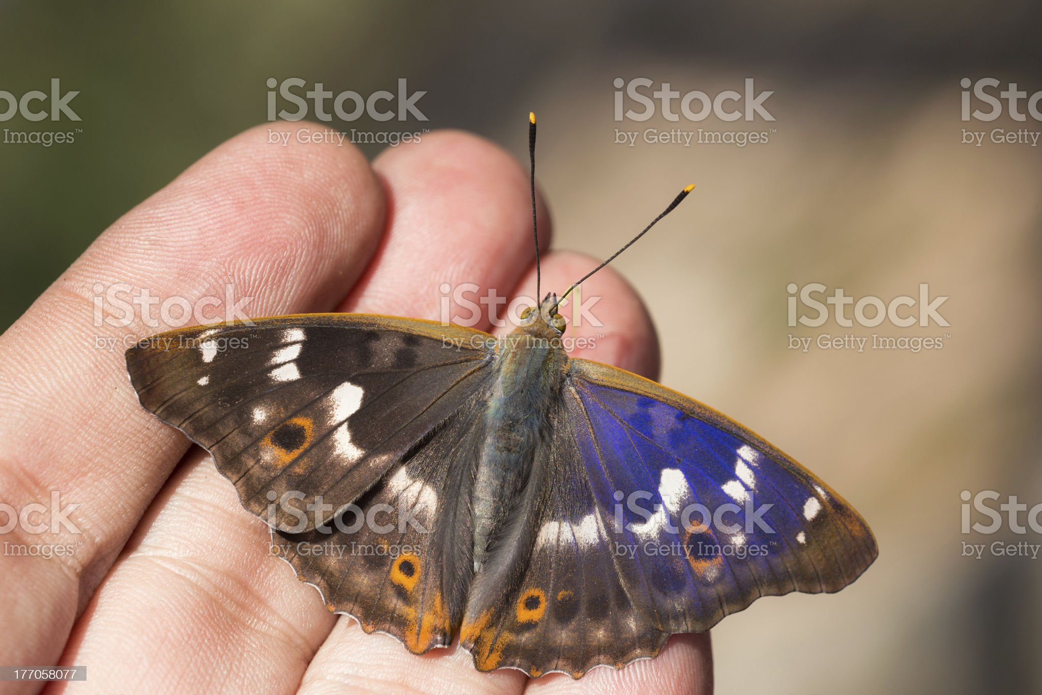 butterfly on human fingers royalty-free stock photo