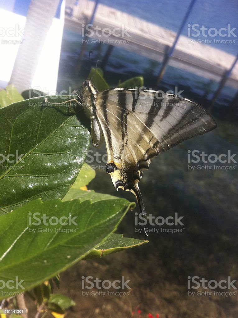 Butterfly on leaf, close-up, Turkey royalty-free stock photo