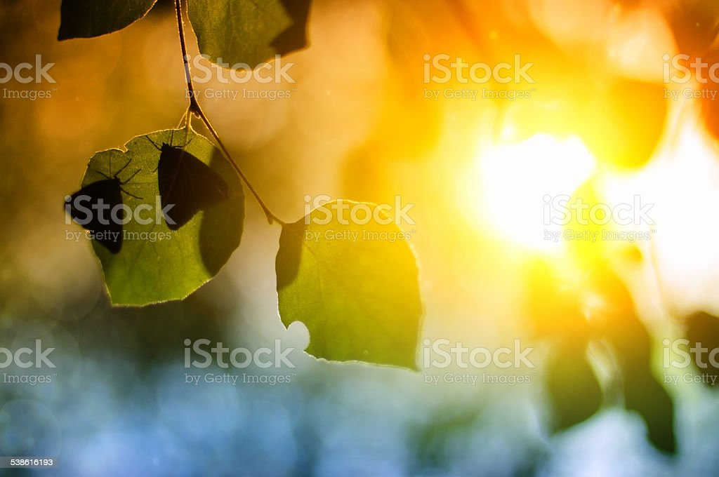 Butterfly on leaves stock photo