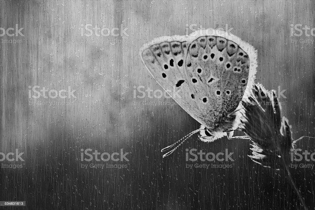 Butterfly on meadow stock photo
