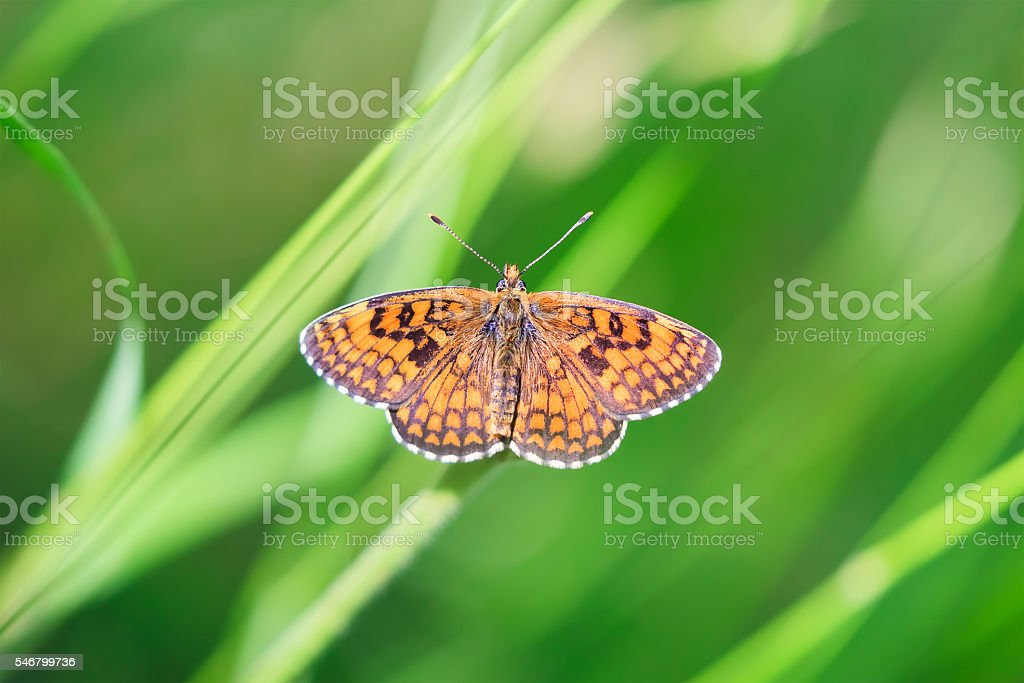 Butterfly on Nature background stock photo