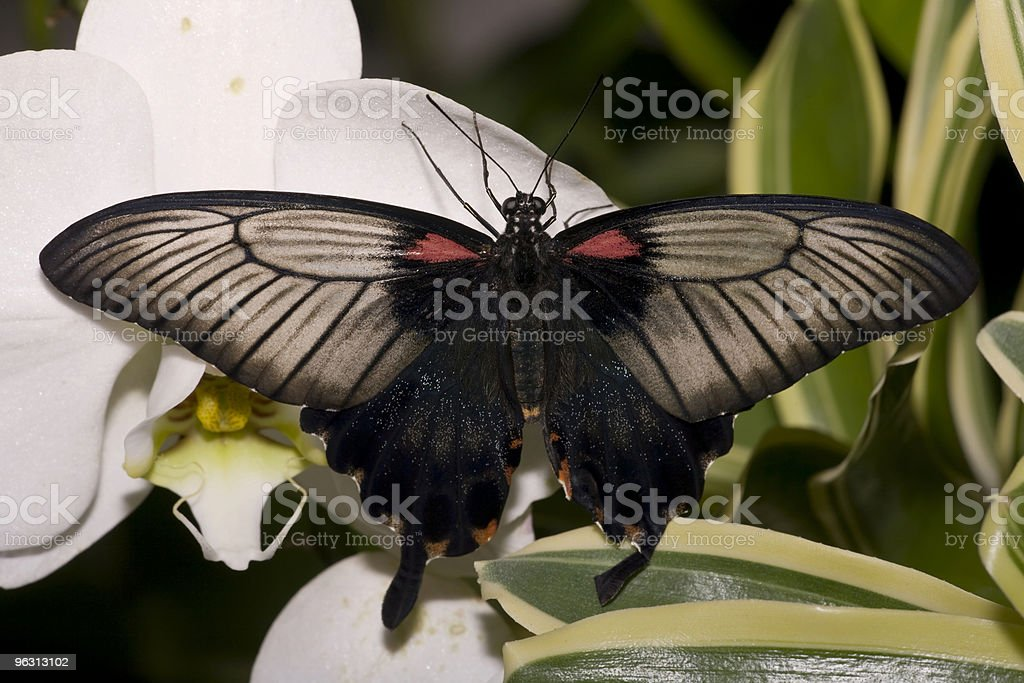 Butterfly on orchid stock photo