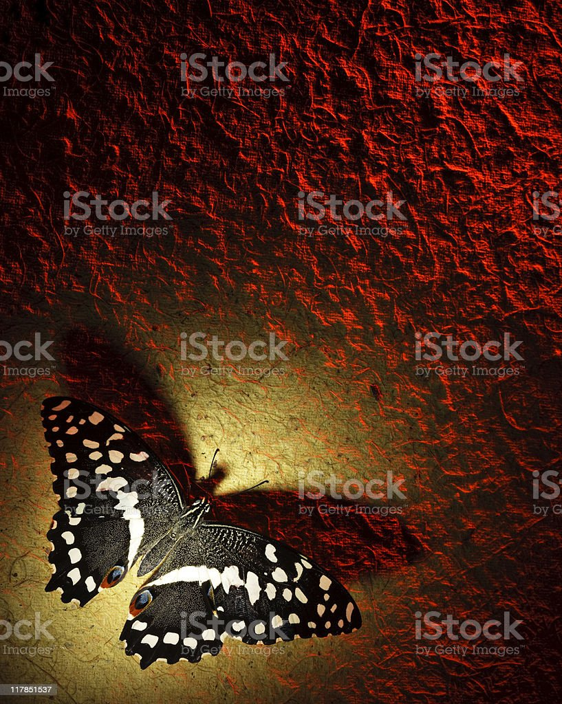 Butterfly on paper stock photo