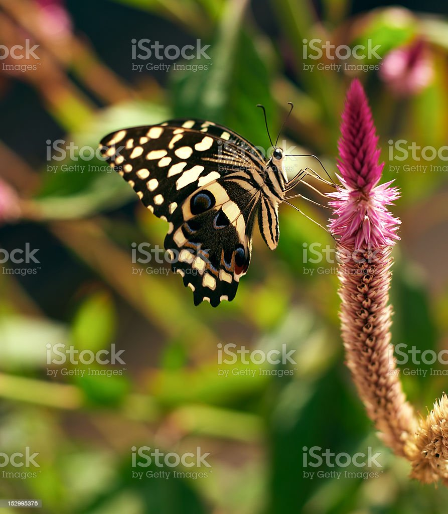 Butterfly on plant royalty-free stock photo