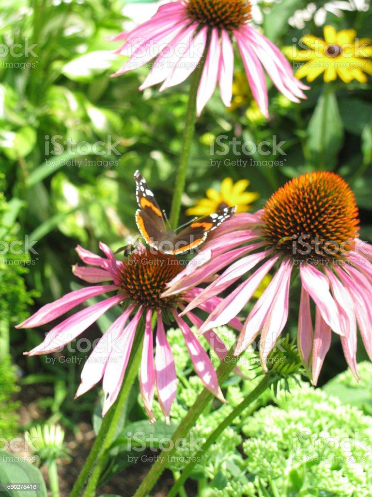 Butterfly on Purple Flowers stock photo