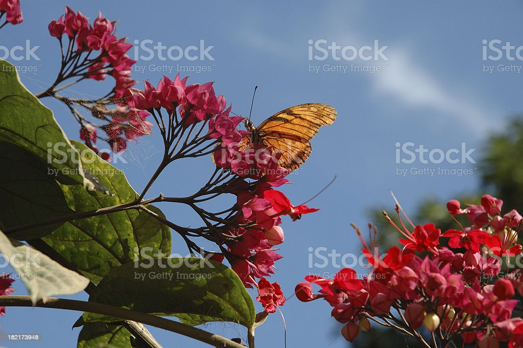 Butterfly on red flowers royalty-free stock photo