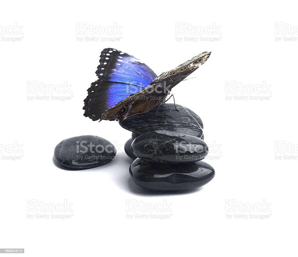 Butterfly on rocks. royalty-free stock photo