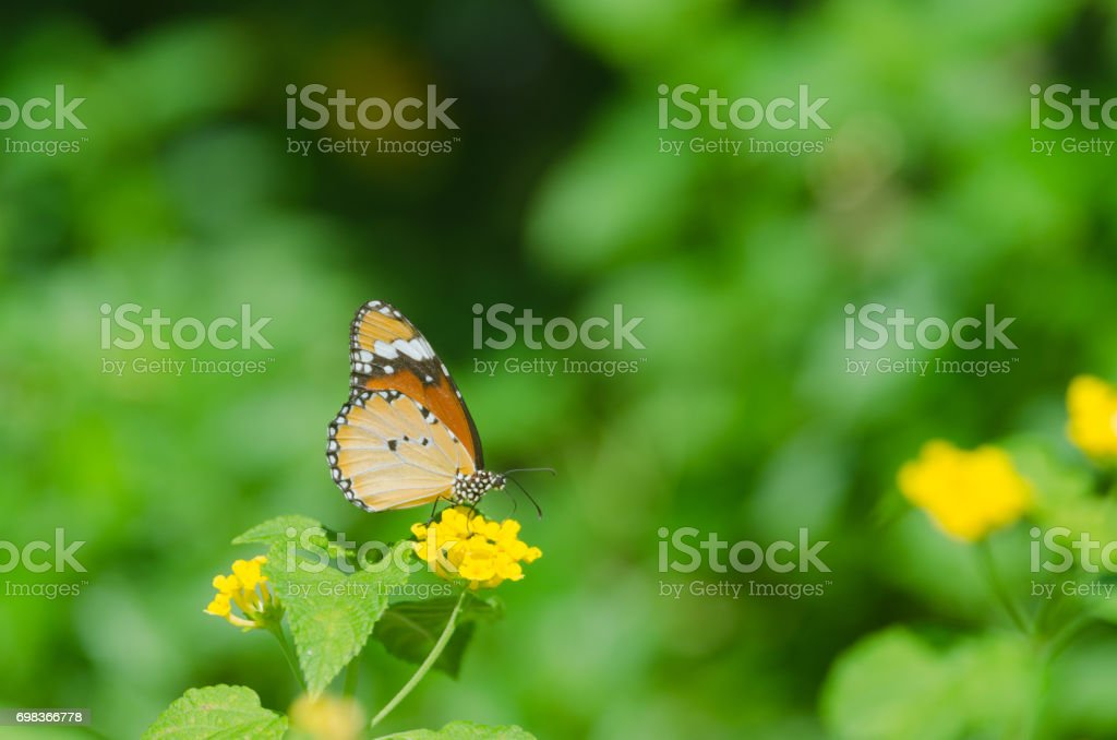 butterfly on small beautiful yellow flower in the park, nature background. stock photo