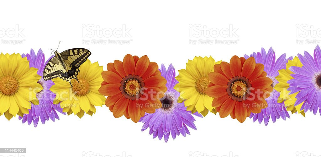 Butterfly on spring flower border royalty-free stock photo