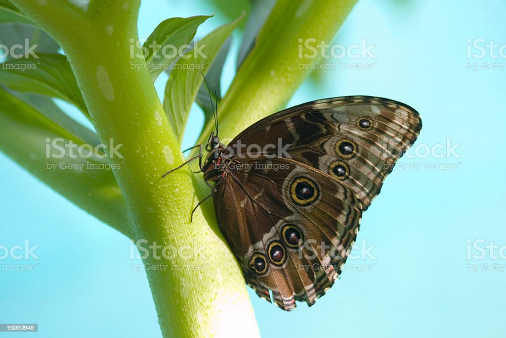 Butterfly on stem stock photo