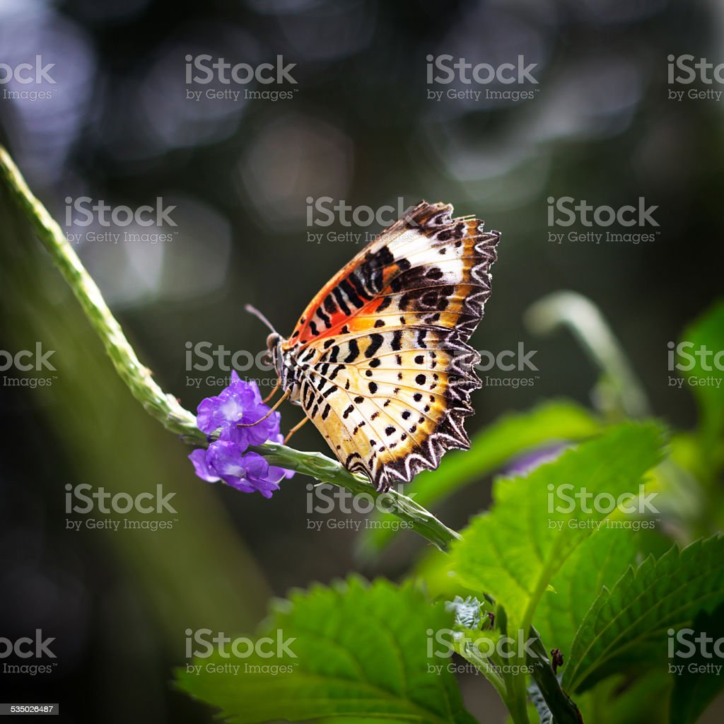 Butterfly on the branch stock photo