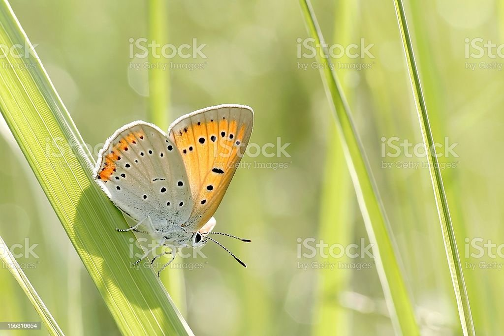 Butterfly on the grass stock photo