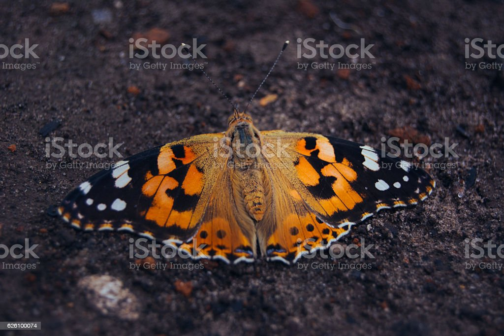 Butterfly on the ground stock photo