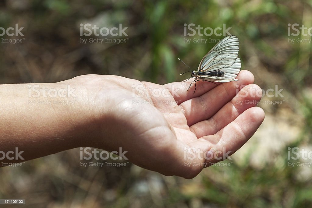 butterfly on the palm royalty-free stock photo