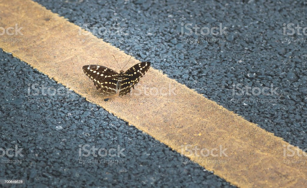Butterfly on the road stock photo