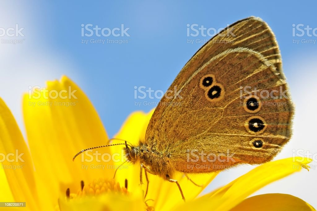 Butterfly on the Yellow Flower royalty-free stock photo