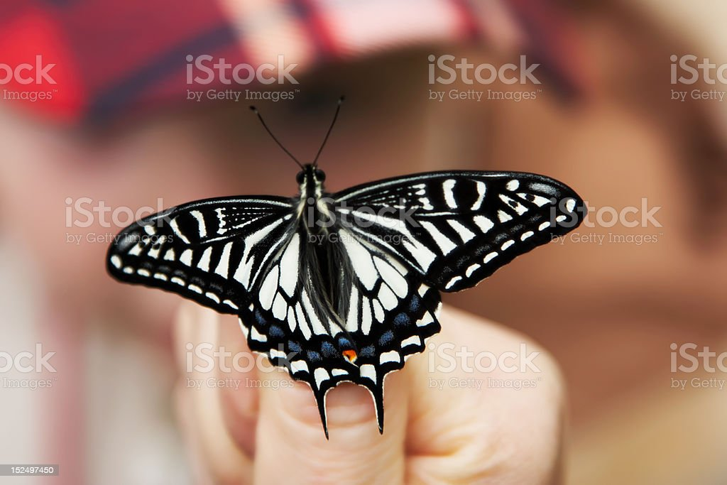 Butterfly on thumb royalty-free stock photo