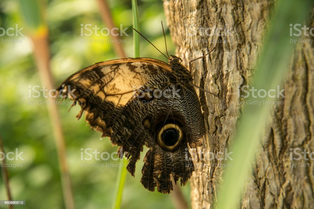 Butterfly On Tree stock photo