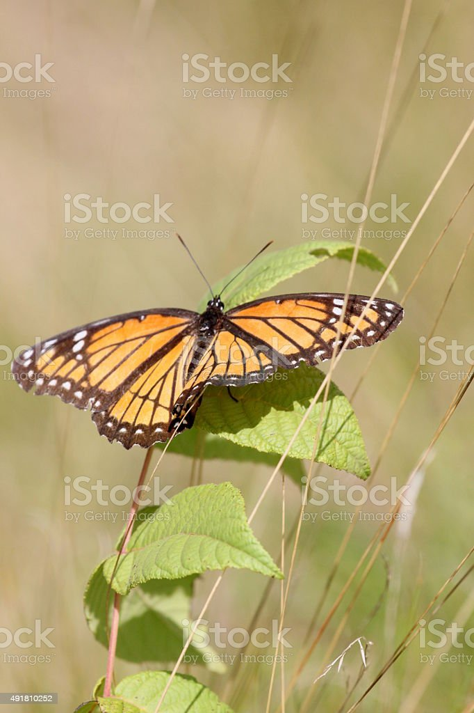 butterfly on weeds stock photo