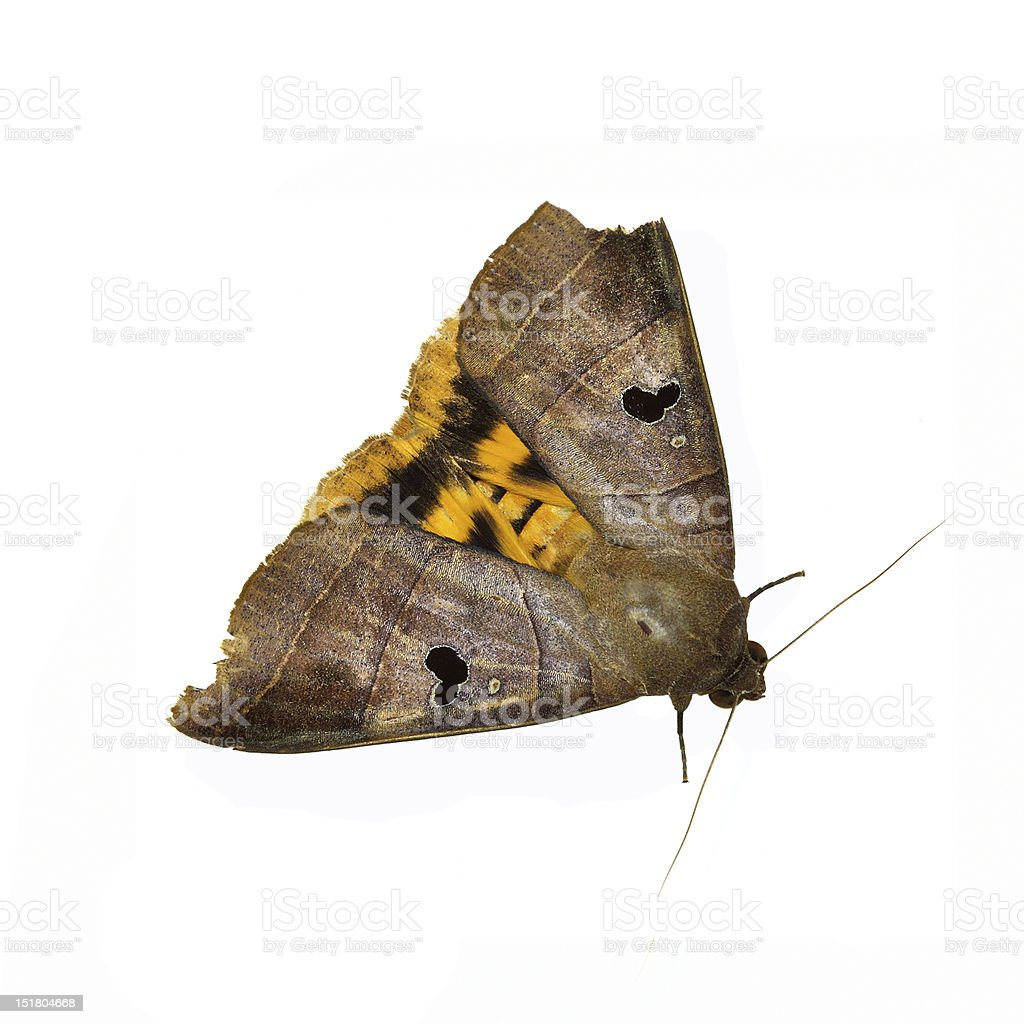 Butterfly On White Background royalty-free stock photo