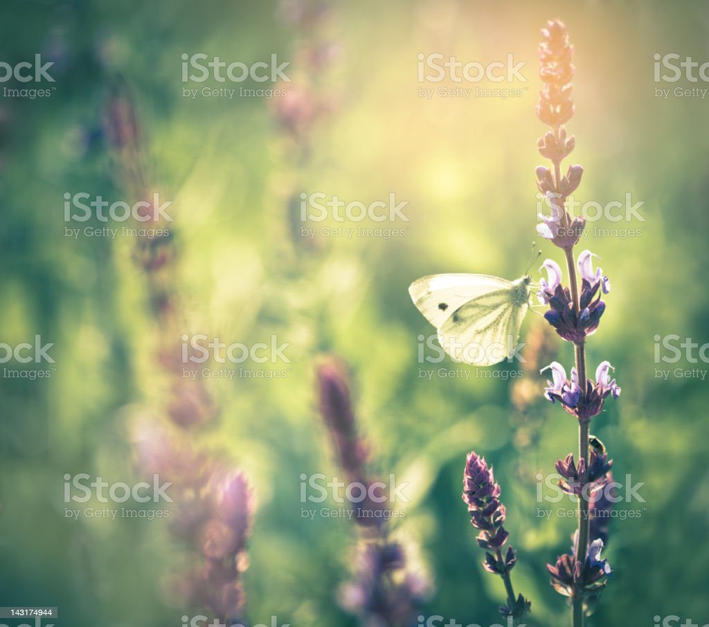 Butterfly on wildflower royalty-free stock photo