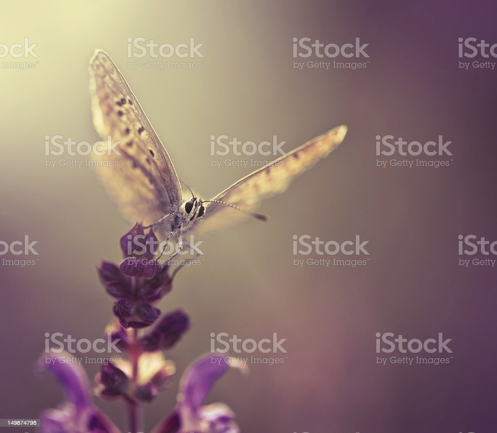 Butterfly on wildflower stock photo