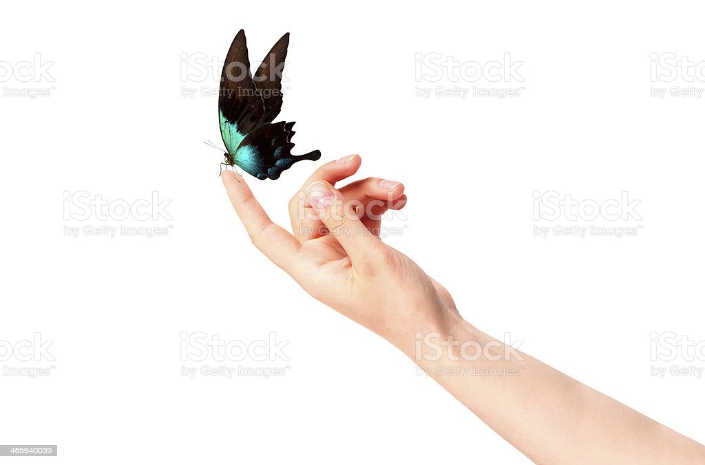 butterfly on woman's hand. In motion stock photo
