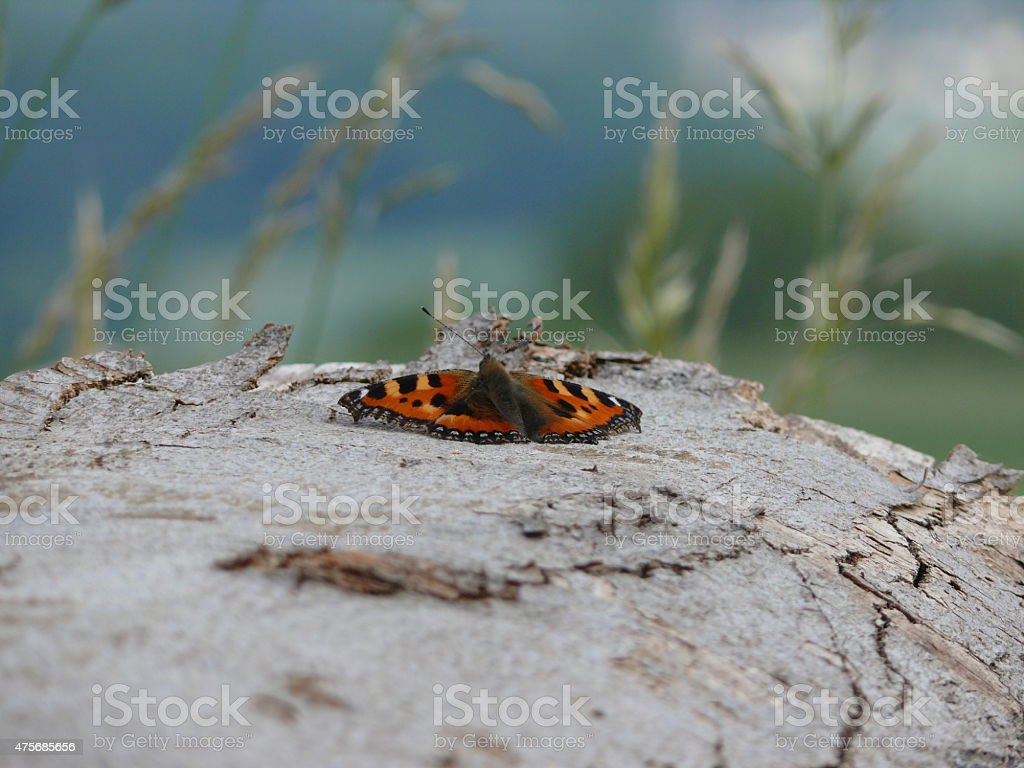 Schmetterling auf Holz royalty-free stock photo