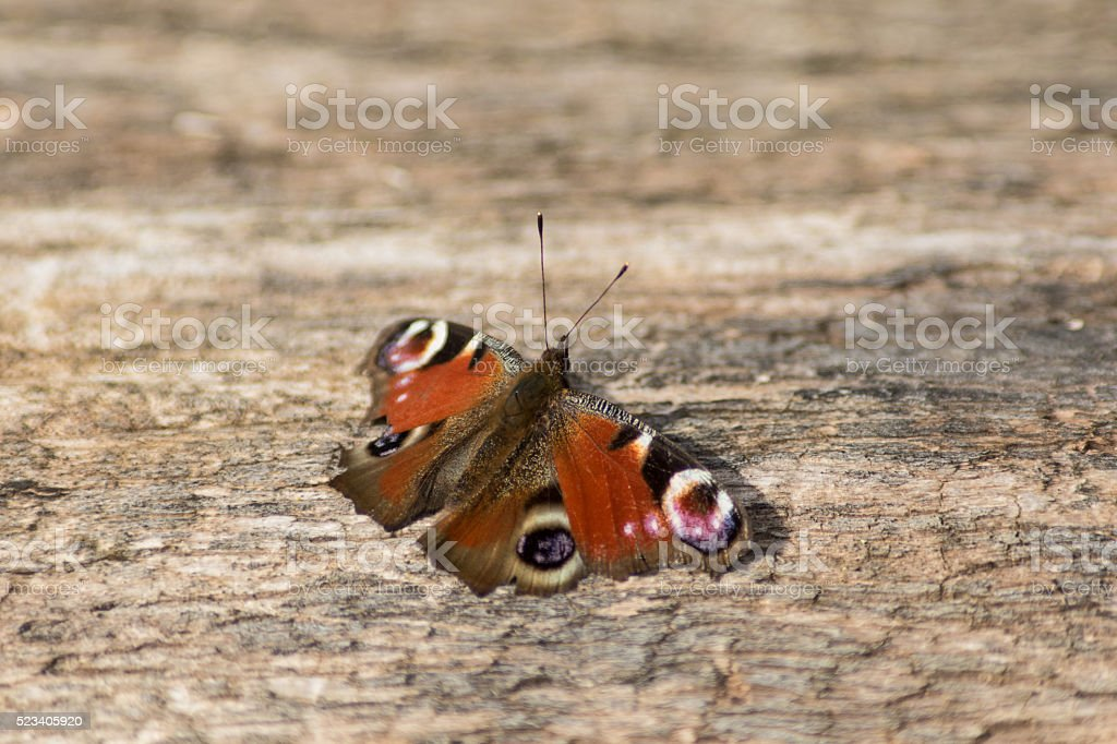 Butterfly on wooden stock photo