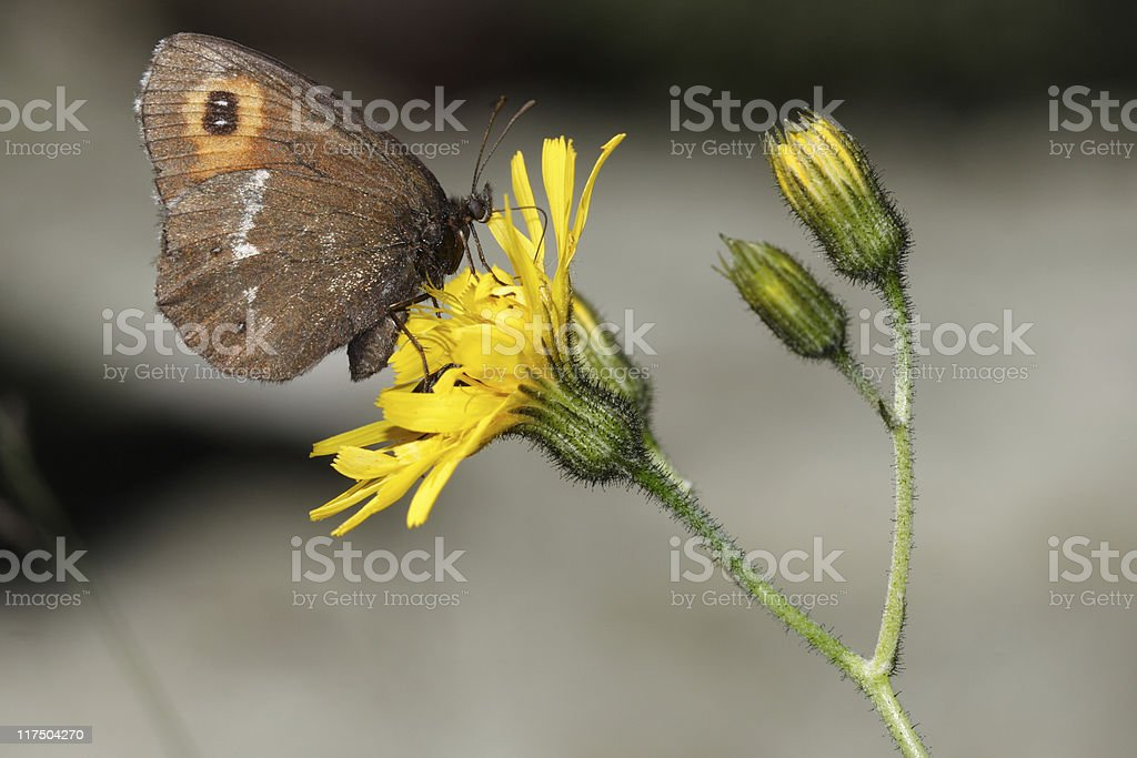 Butterfly on yellow flower stock photo