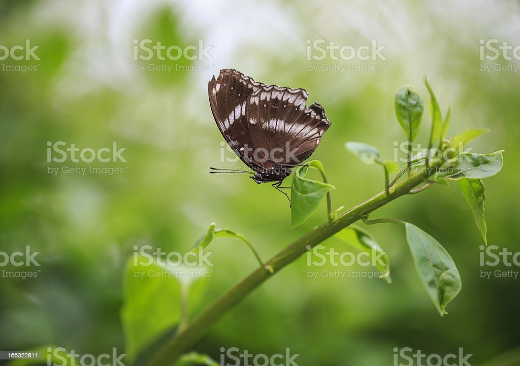 Butterfly  perched on a leaf royalty-free stock photo