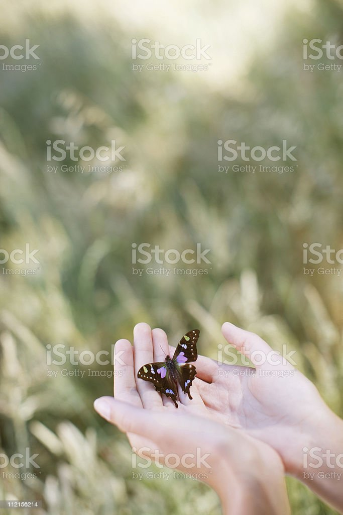 Butterfly perching on womans hands stock photo