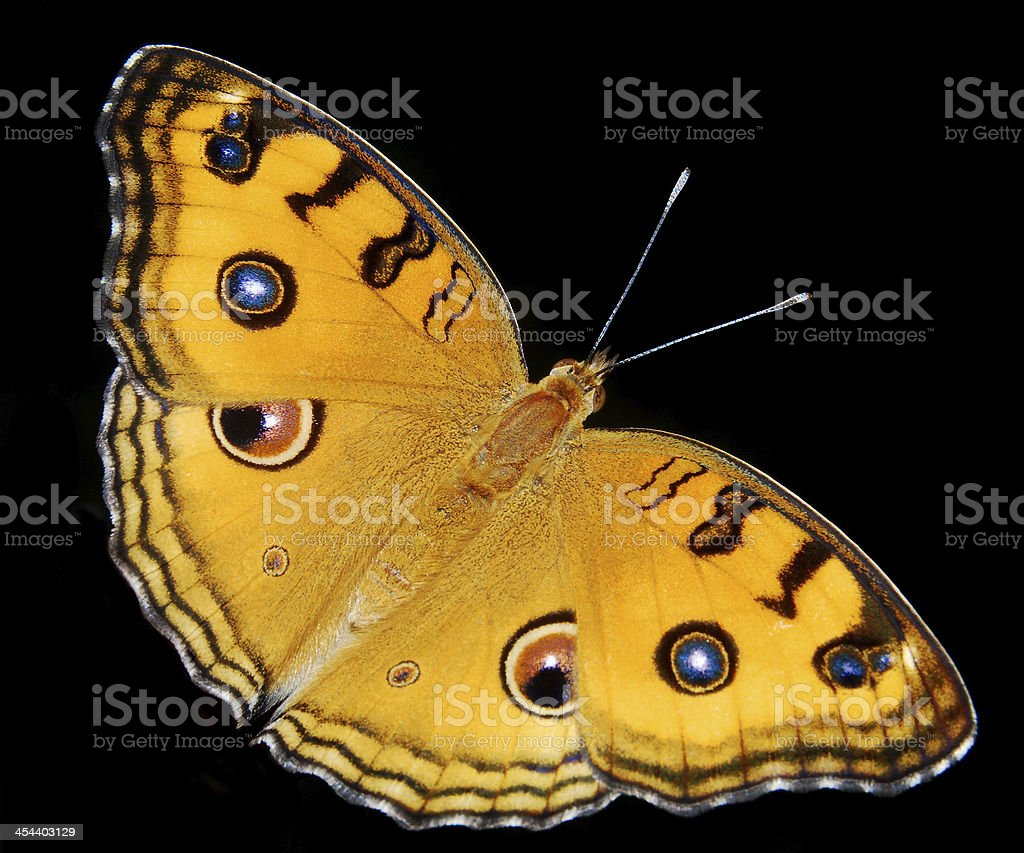 butterfly stock photo