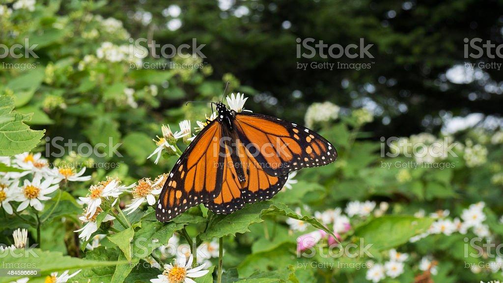 Farfalla foto stock royalty-free