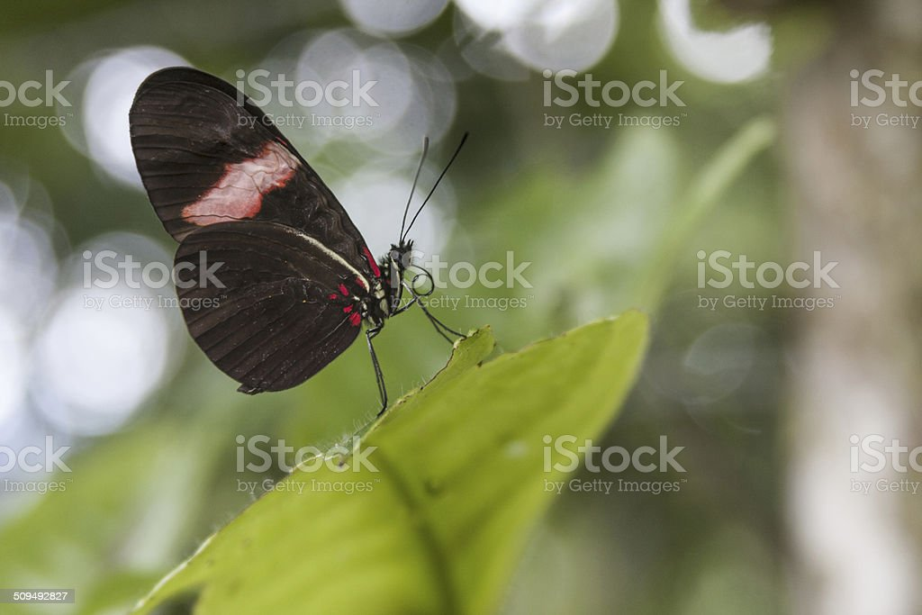 Butterfly. stock photo