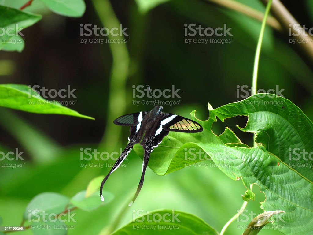 ?Butterfly royalty-free stock photo