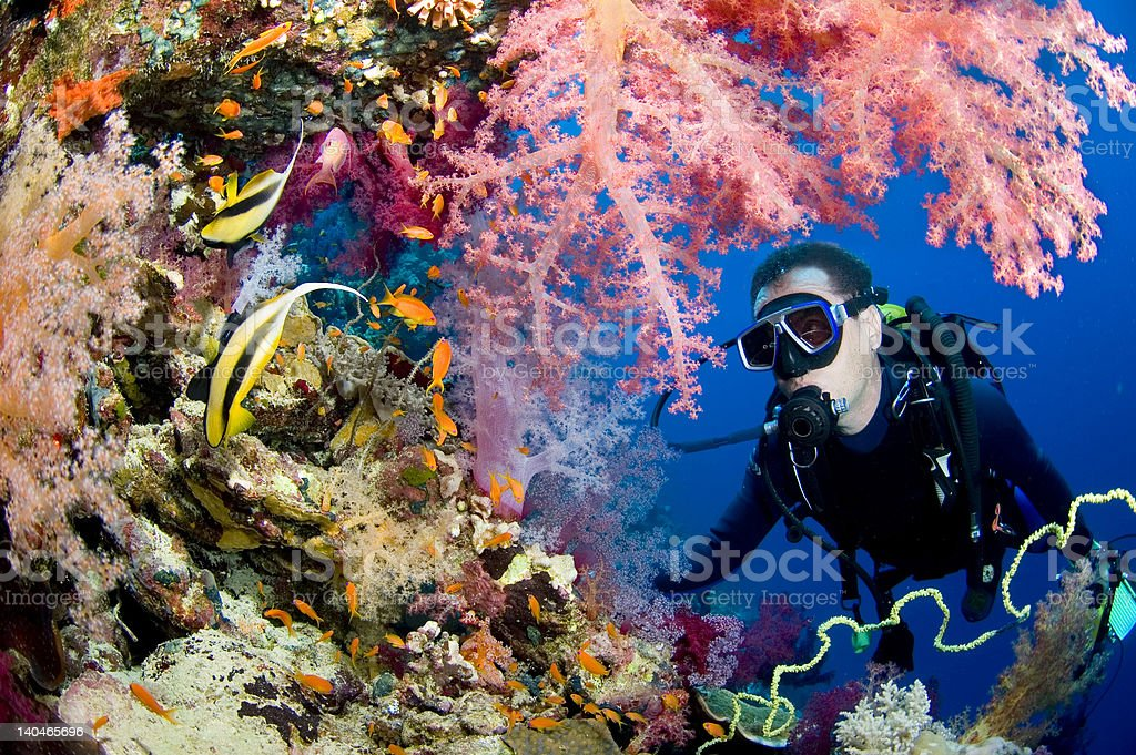 Butterfly reef stock photo