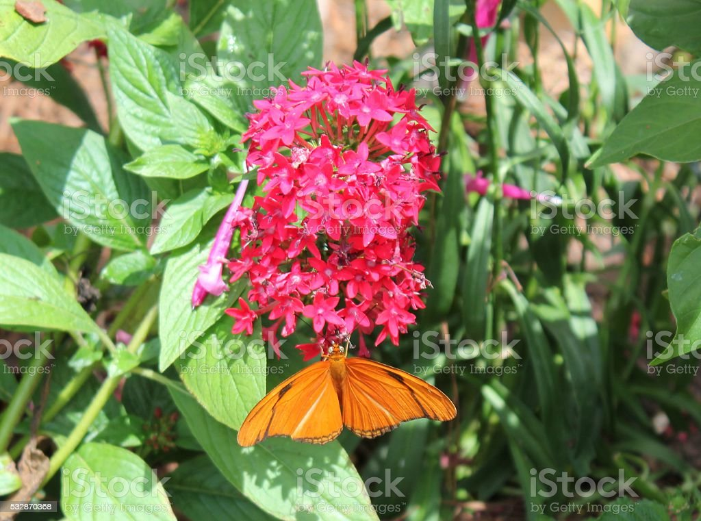 Butterfly resting on flowers stock photo