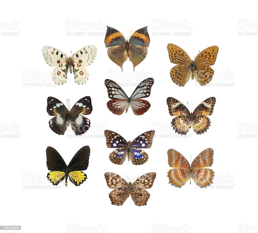 butterfly set collection stock photo