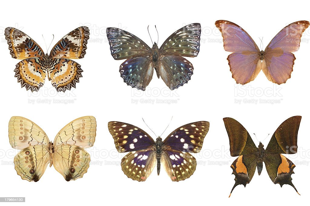 butterfly set royalty-free stock photo