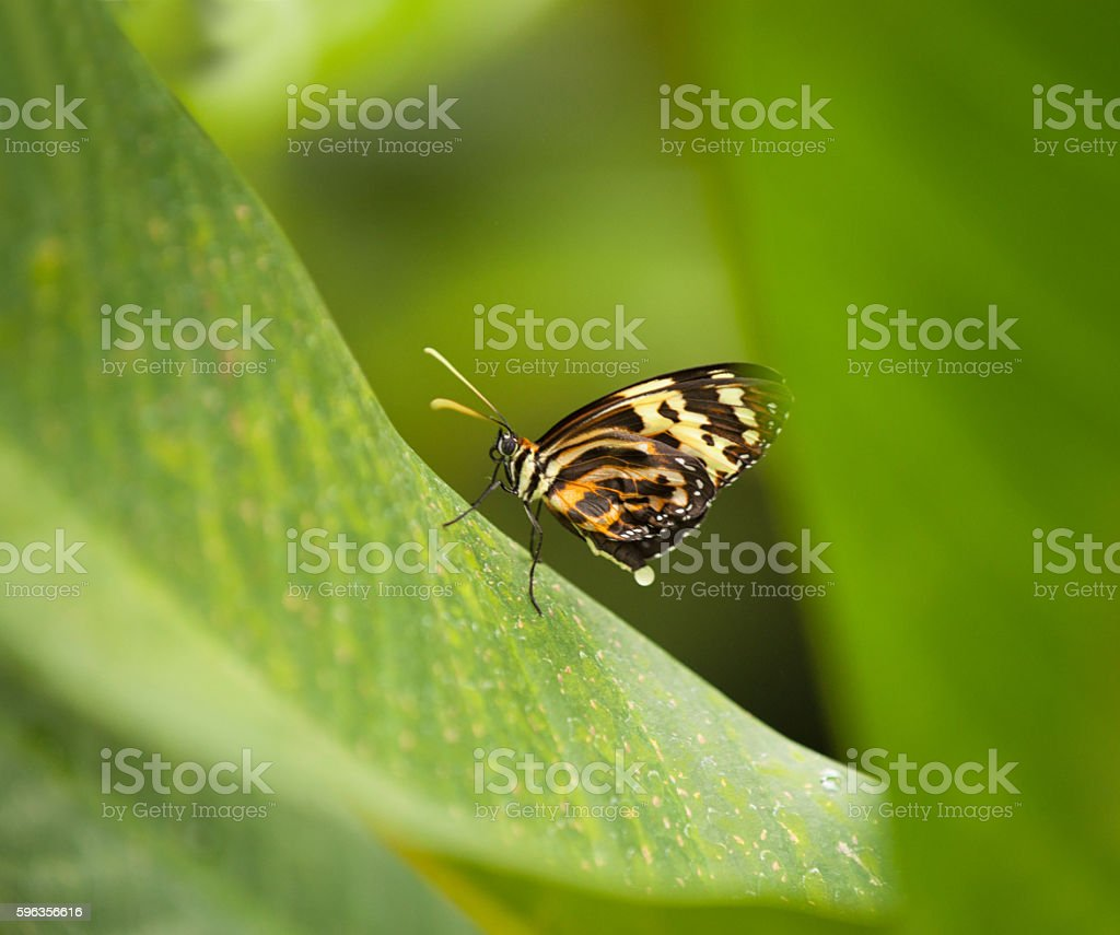 Butterfly sitting on a leaf stock photo
