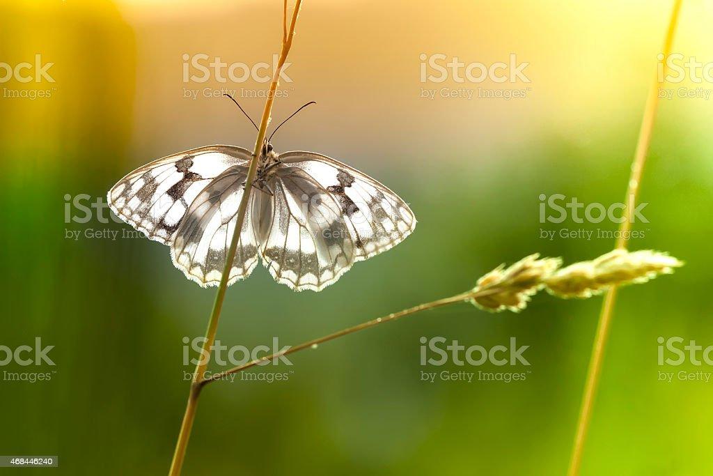 Borboleta, sentado em uma folha de fundo natural foto royalty-free