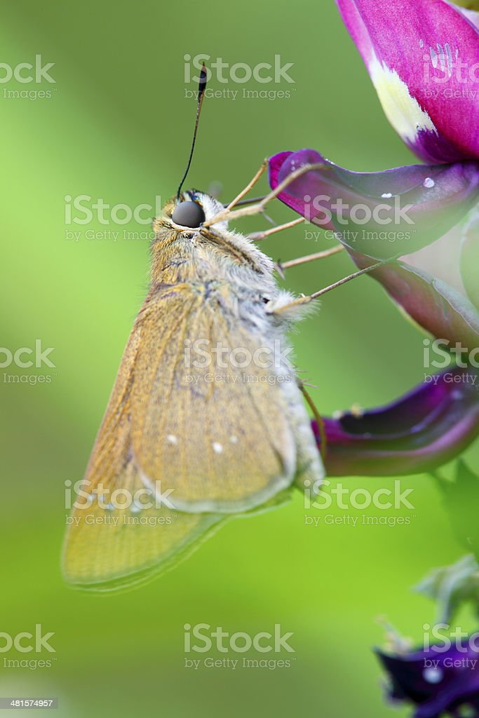 Butterfly stopped at Pink Flower stock photo